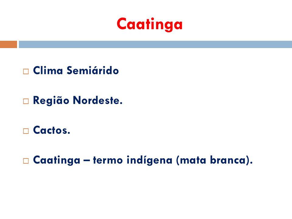 Caatinga  Clima Semiárido  Região Nordeste.  Cactos.  Caatinga – termo indígena (mata branca).