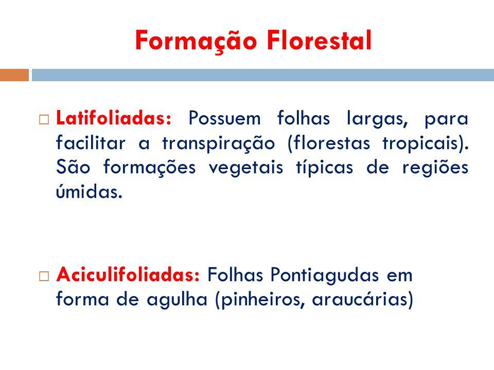 Formação Florestal  Latifoliadas: Possuem folhas largas, para facilitar a transpiração (florestas tropicais). São formações vegetais típicas de regiõ
