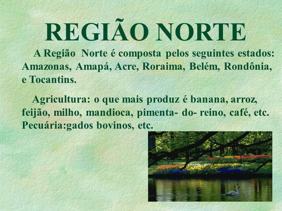 REGIÃO SUL A região sul é uma das mais privilegiada, por possuir ricas Bacias Hidrográficas, como: Bacia Platina e do Sudeste e Sul.