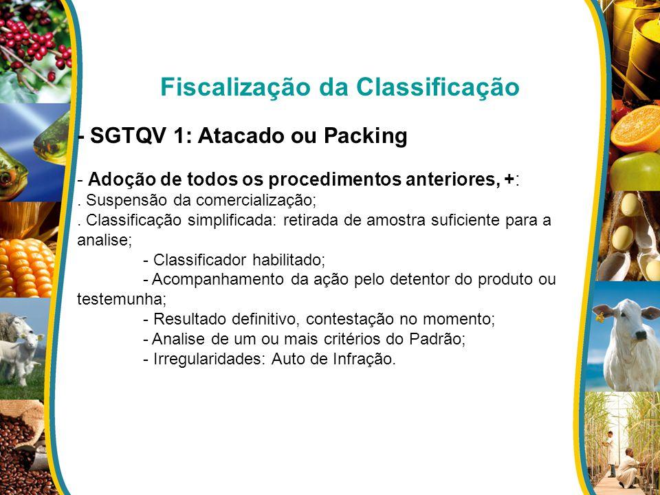 Fiscalização da Classificação - SGTQV 1: Atacado ou Packing - Adoção de todos os procedimentos anteriores, +:. Suspensão da comercialização;. Classifi
