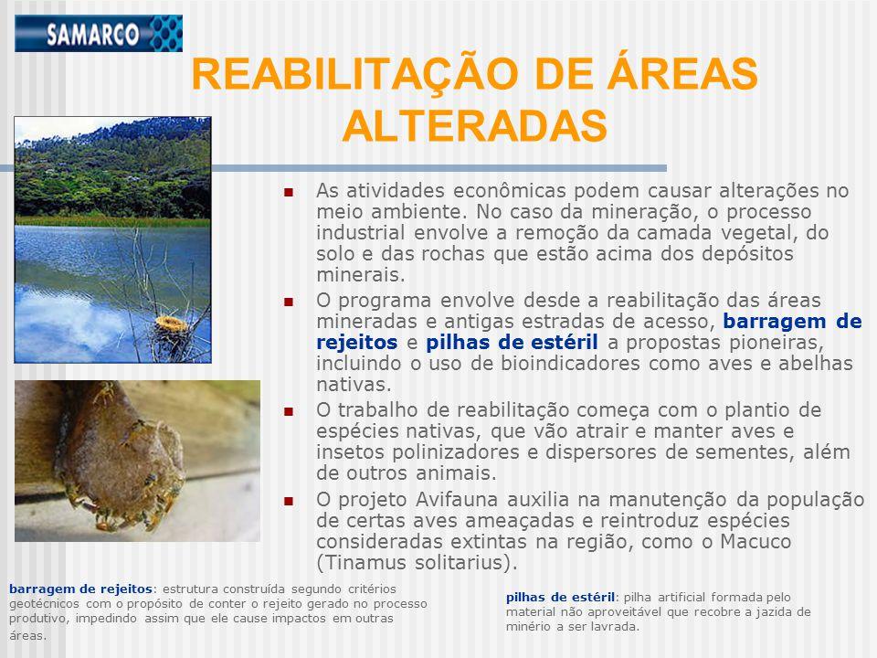 REABILITAÇÃO DE ÁREAS ALTERADAS As atividades econômicas podem causar alterações no meio ambiente.