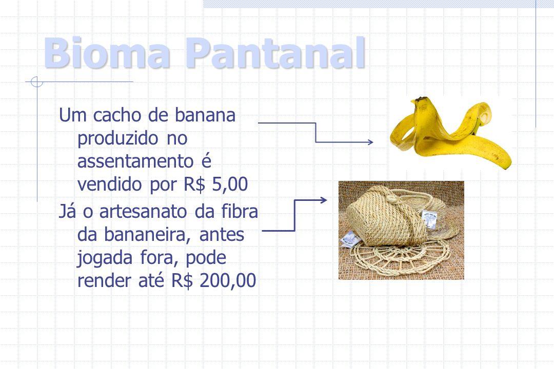 Um cacho de banana produzido no assentamento é vendido por R$ 5,00 Já o artesanato da fibra da bananeira, antes jogada fora, pode render até R$ 200,00