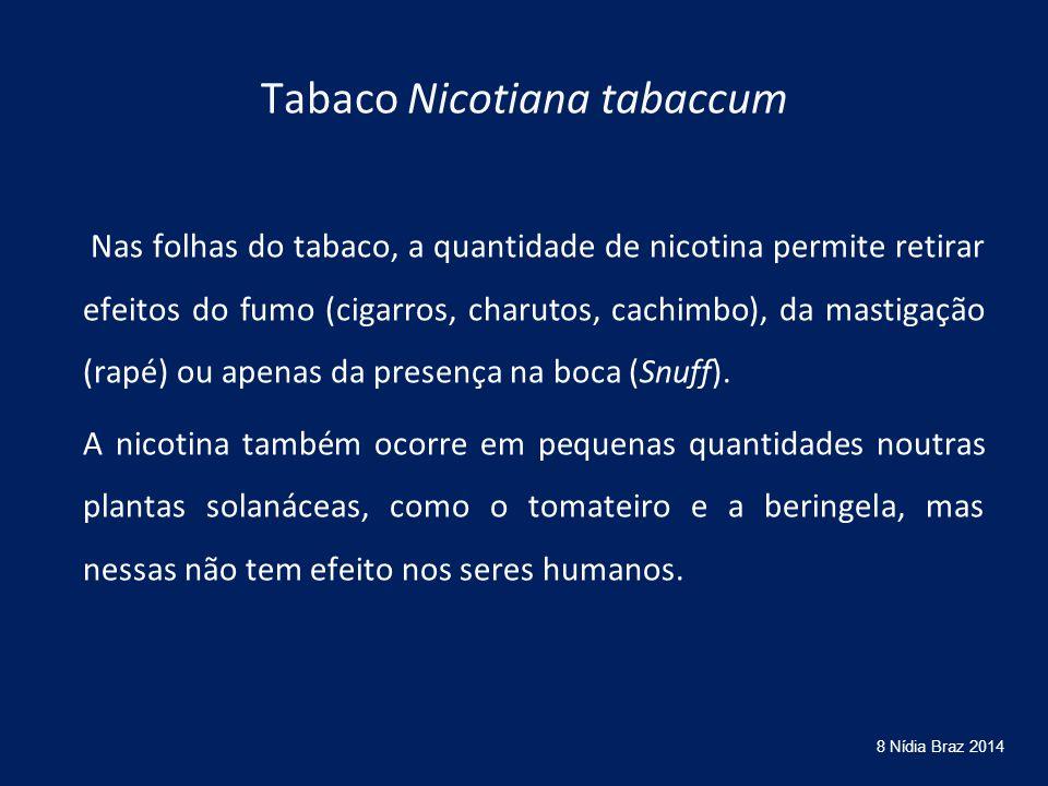 Tabaco Nicotiana tabaccum Nas folhas do tabaco, a quantidade de nicotina permite retirar efeitos do fumo (cigarros, charutos, cachimbo), da mastigação (rapé) ou apenas da presença na boca (Snuff).