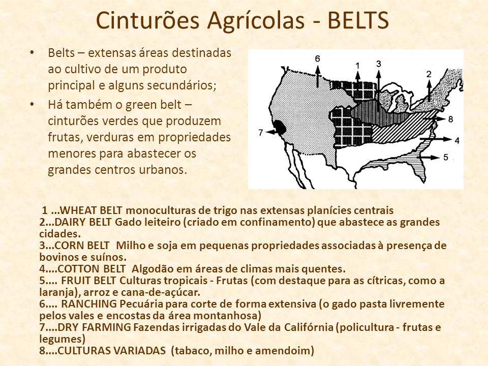 Cinturões Agrícolas - BELTS Belts – extensas áreas destinadas ao cultivo de um produto principal e alguns secundários; Há também o green belt – cintur