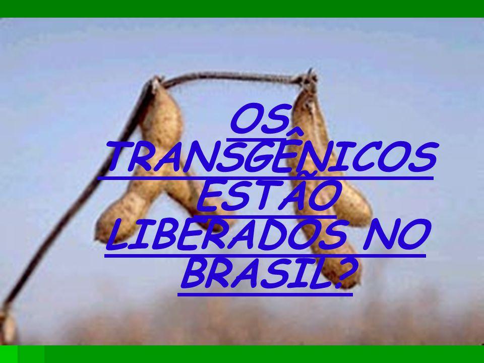 OS TRANSGÊNICOS ESTÃO LIBERADOS NO BRASIL