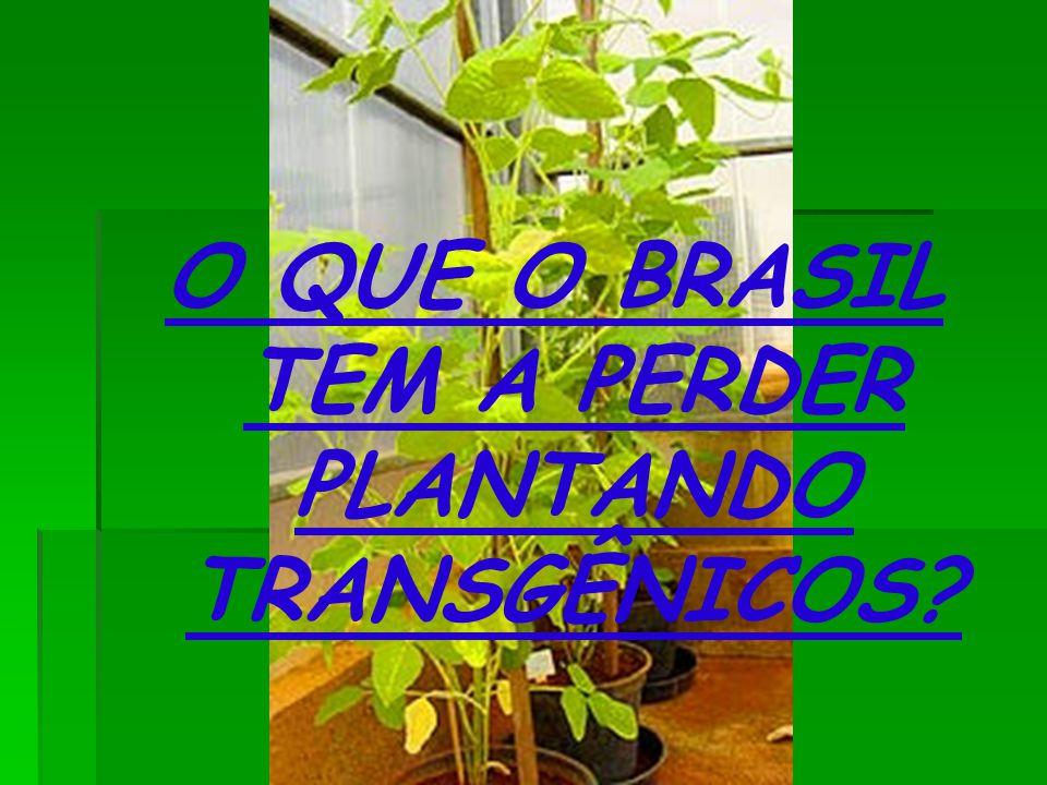 O QUE O BRASIL TEM A PERDER PLANTANDO TRANSGÊNICOS?