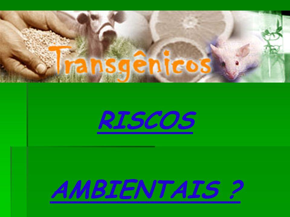 RISCOS AMBIENTAIS ?