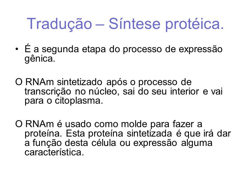 Tradução – Síntese protéica. É a segunda etapa do processo de expressão gênica. O RNAm sintetizado após o processo de transcrição no núcleo, sai do se