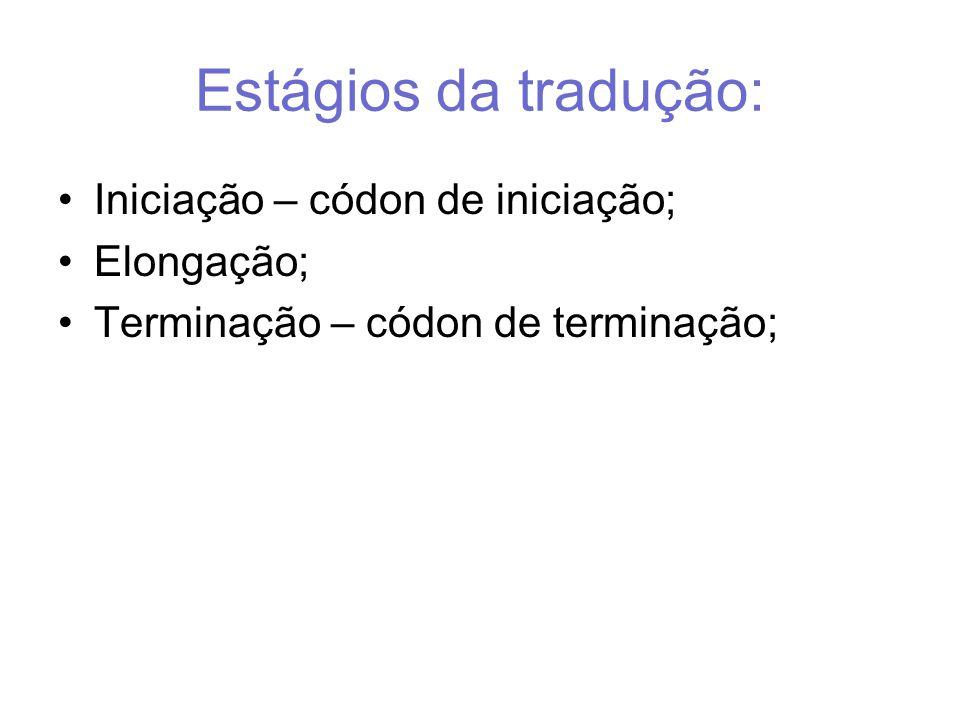 Estágios da tradução: Iniciação – códon de iniciação; Elongação; Terminação – códon de terminação;