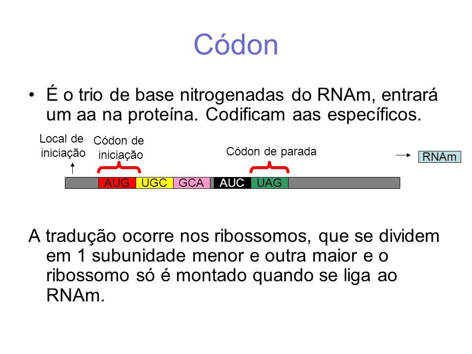 Códon É o trio de base nitrogenadas do RNAm, entrará um aa na proteína.