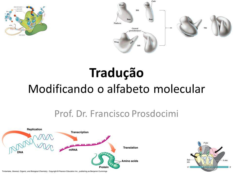 (des)Controle da tradução III Não acontece verificação do aminoácido na tradução O controle, portanto, é feito apenas no momento da aminoacilação do tRNA