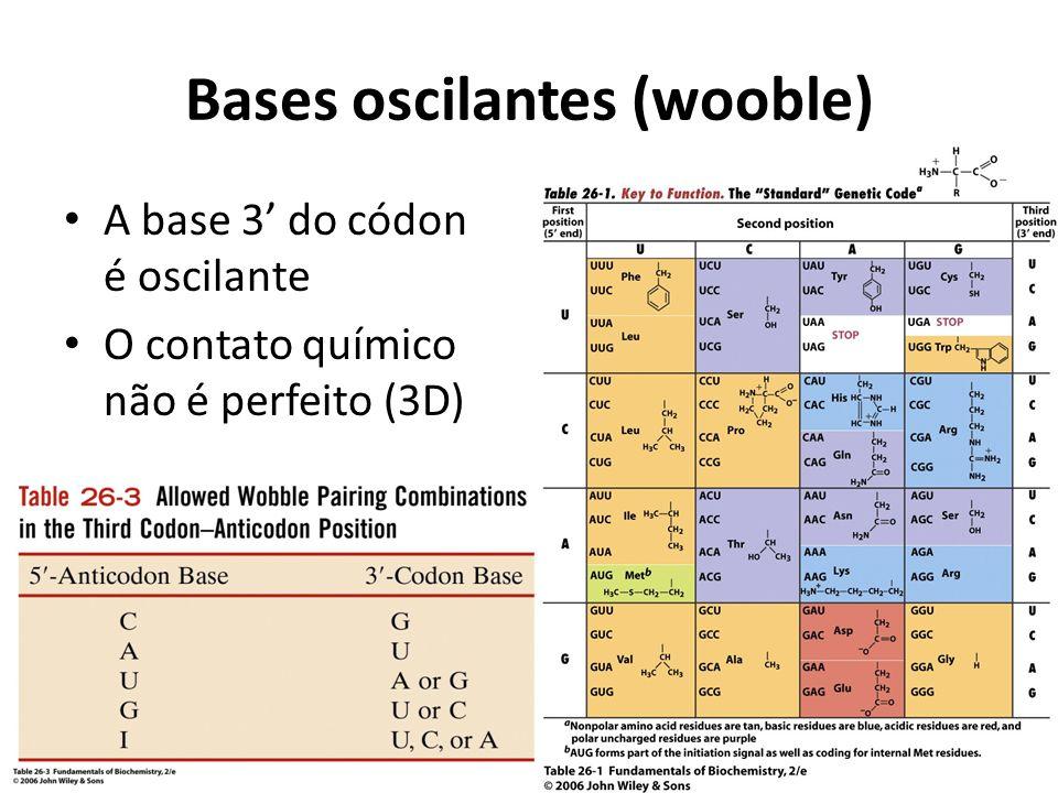 Bases oscilantes (wooble) A base 3' do códon é oscilante O contato químico não é perfeito (3D)