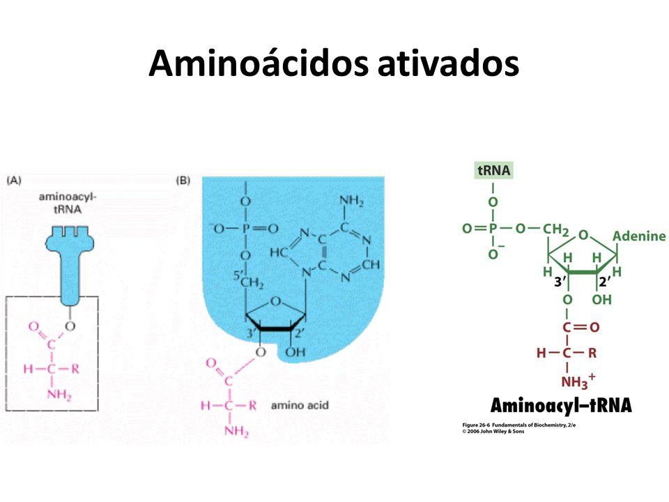 Aminoácidos ativados