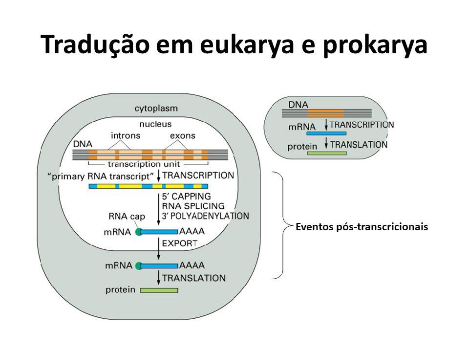 Tradução em eukarya e prokarya Eventos pós-transcricionais