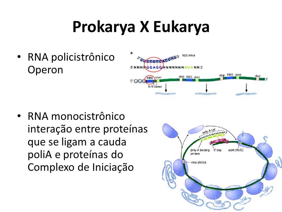 Prokarya X Eukarya RNA policistrônico Operon RNA monocistrônico interação entre proteínas que se ligam a cauda poliA e proteínas do Complexo de Inicia
