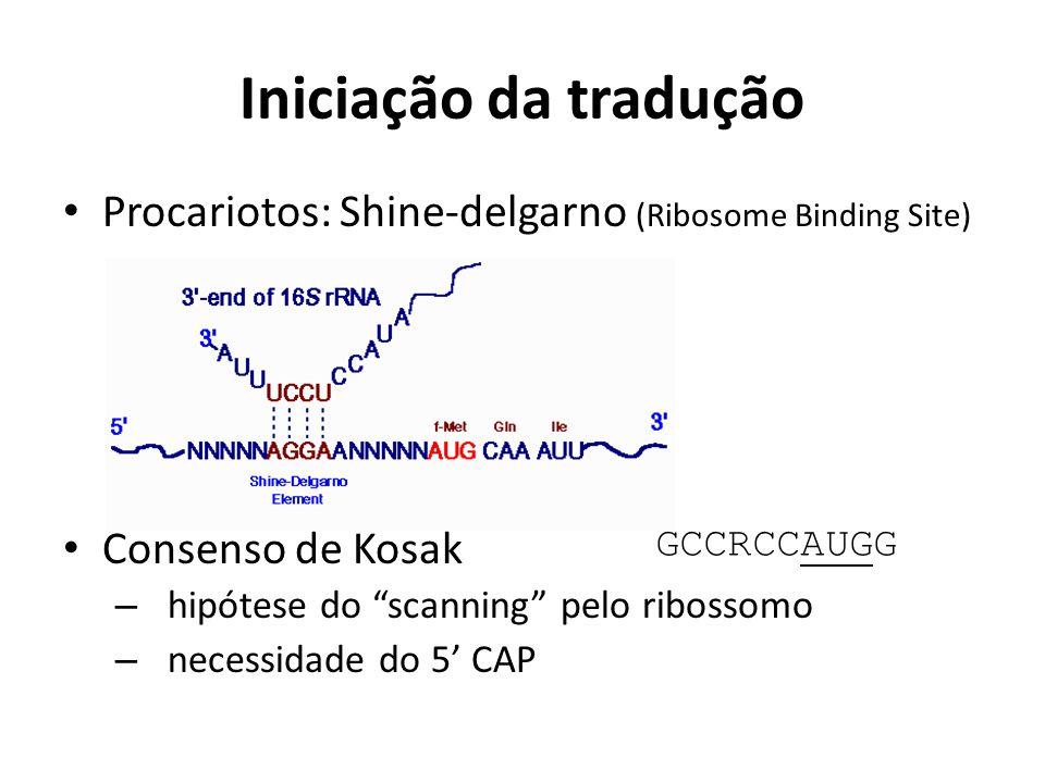 """Iniciação da tradução Procariotos: Shine-delgarno (Ribosome Binding Site) Consenso de Kosak – hipótese do """"scanning"""" pelo ribossomo – necessidade do 5"""