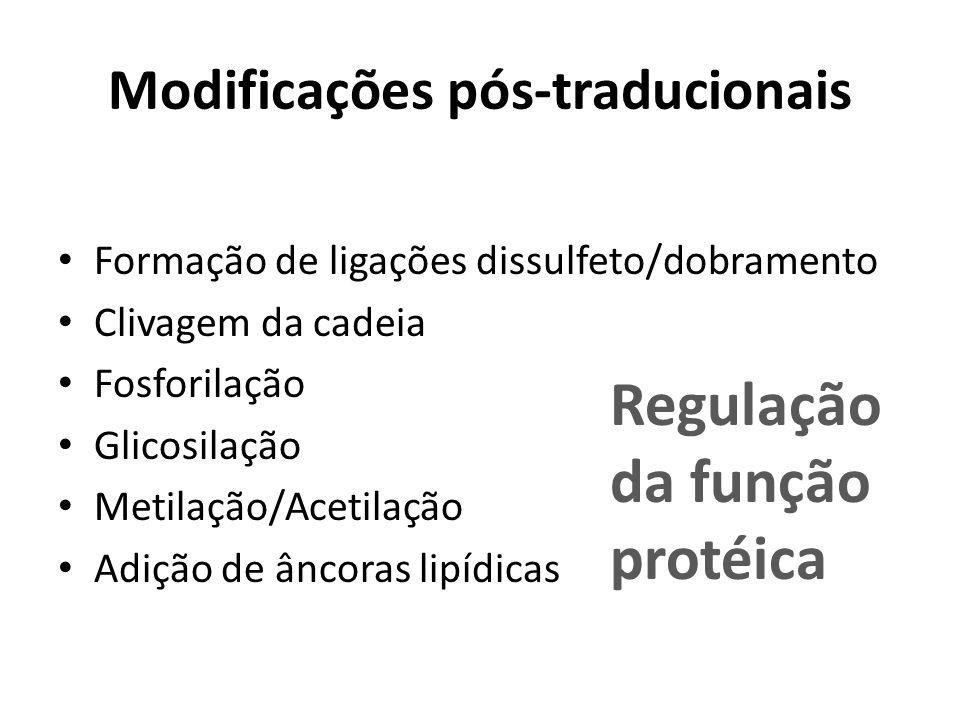 Modificações pós-traducionais Formação de ligações dissulfeto/dobramento Clivagem da cadeia Fosforilação Glicosilação Metilação/Acetilação Adição de â