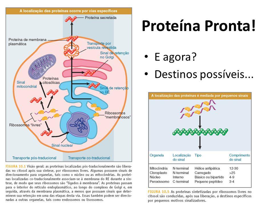 Proteína Pronta! E agora? Destinos possíveis...