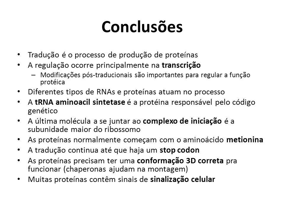 Conclusões Tradução é o processo de produção de proteínas A regulação ocorre principalmente na transcrição – Modificações pós-traducionais são importa