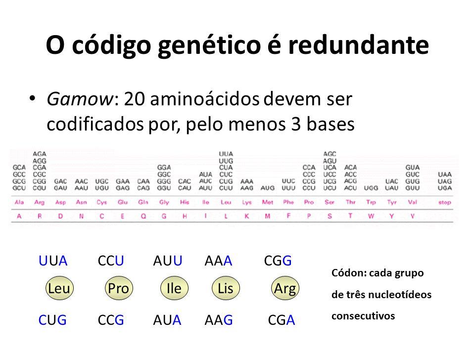 O código genético é redundante Gamow: 20 aminoácidos devem ser codificados por, pelo menos 3 bases LeuProArgLisIle UUAUUACCUAUUAAACGG CUGCUGCCGAUAAAGC