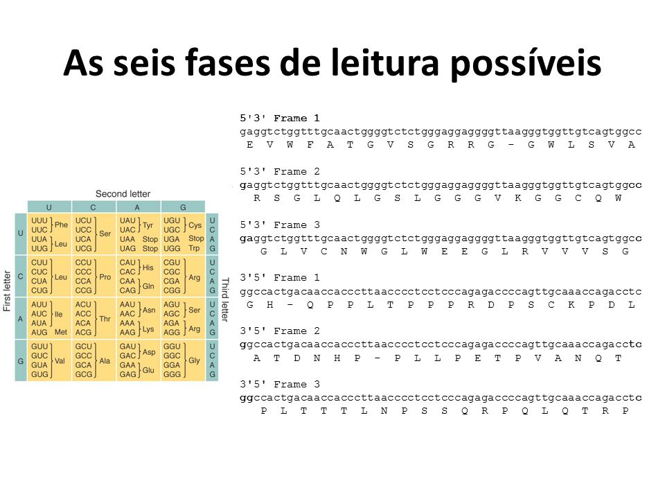 As seis fases de leitura possíveis 5'3' Frame 1 gaggtctggtttgcaactggggtctctgggaggaggggttaagggtggttgtcagtggcc E V W F A T G V S G R R G - G W L S V A 5