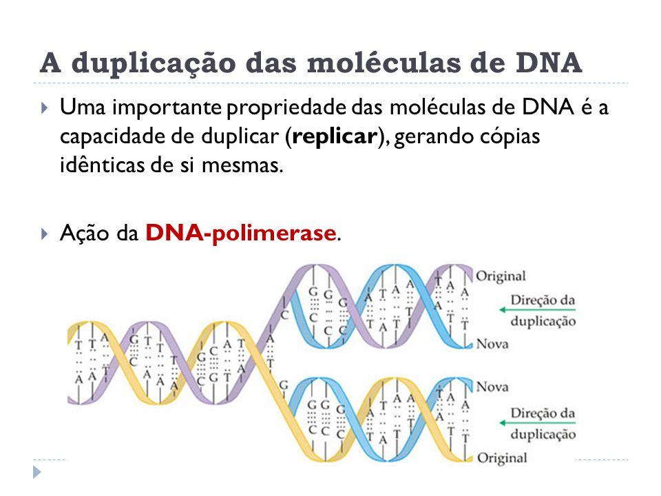 A duplicação das moléculas de DNA  Uma importante propriedade das moléculas de DNA é a capacidade de duplicar (replicar), gerando cópias idênticas de si mesmas.