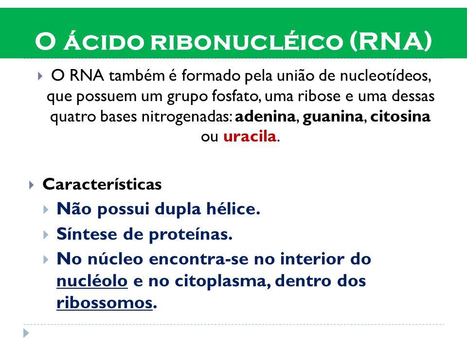 O ácido ribonucléico (RNA)  O RNA também é formado pela união de nucleotídeos, que possuem um grupo fosfato, uma ribose e uma dessas quatro bases nitrogenadas: adenina, guanina, citosina ou uracila.