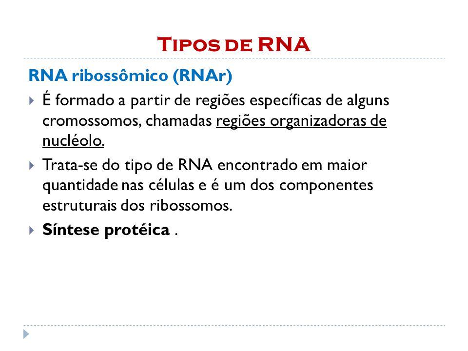 Tipos de RNA RNA ribossômico (RNAr)  É formado a partir de regiões específicas de alguns cromossomos, chamadas regiões organizadoras de nucléolo.
