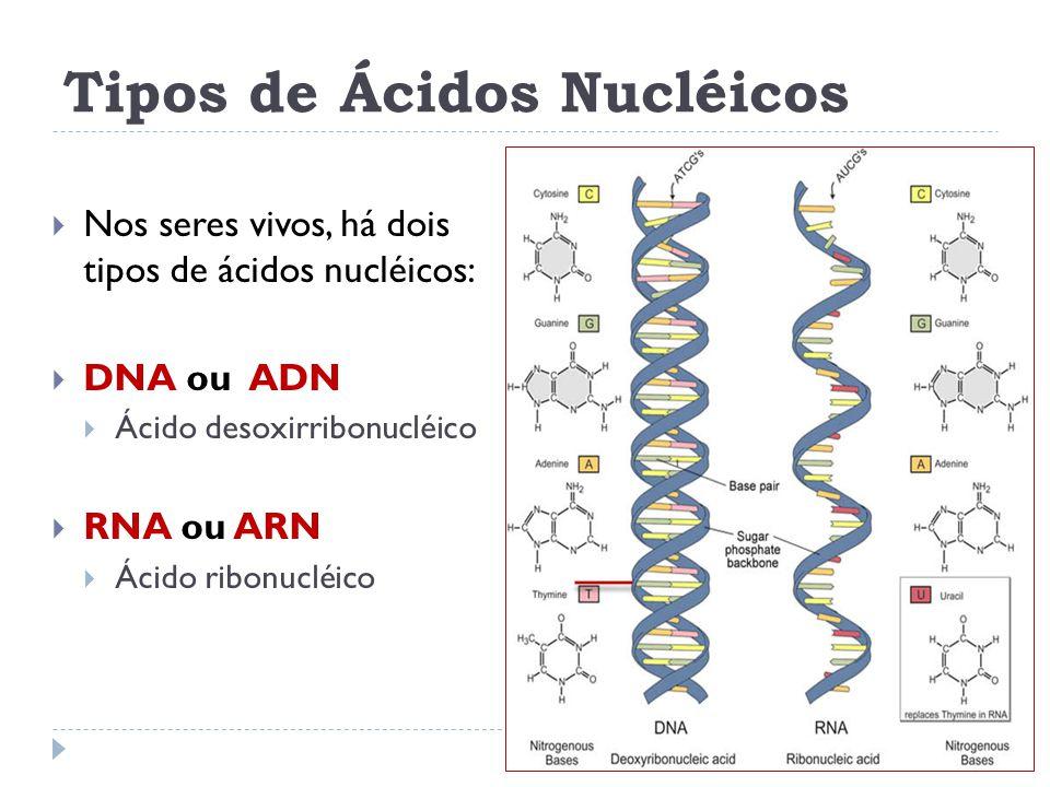 Tipos de Ácidos Nucléicos  Nos seres vivos, há dois tipos de ácidos nucléicos:  DNA ou ADN  Ácido desoxirribonucléico  RNA ou ARN  Ácido ribonucléico