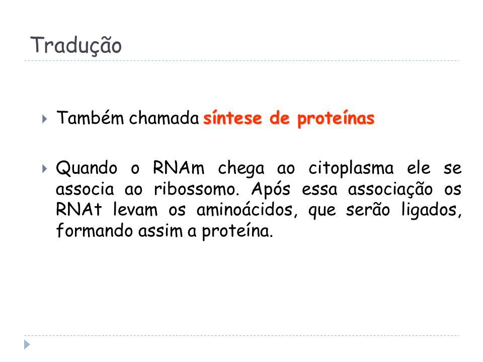 Tradução síntese de proteínas  Também chamada síntese de proteínas  Quando o RNAm chega ao citoplasma ele se associa ao ribossomo.