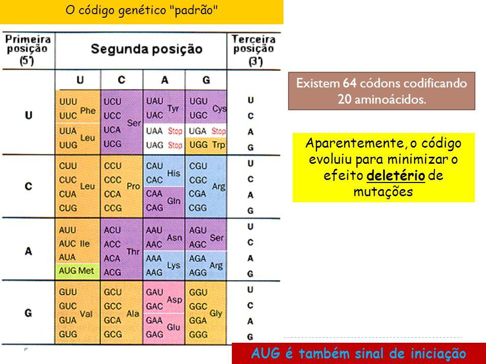 O código genético padrão AUG é também sinal de iniciação Aparentemente, o código evoluiu para minimizar o efeito deletério de mutações Existem 64 códons codificando 20 aminoácidos.