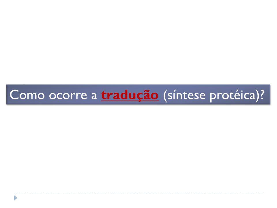 Como ocorre a tradução (síntese protéica)?