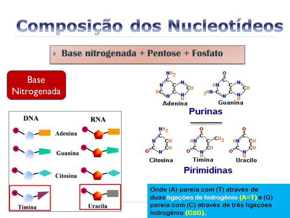  Base nitrogenada + Pentose + Fosfato Base Nitrogenada Onde (A) pareia com (T) através de duas ligações de hidrogênio (A=T) e (G) pareia com (C) através de três ligações hidrogênio (C ≡ G).