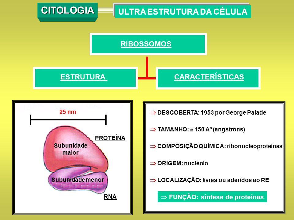  DESCOBERTA: 1953 por George Palade  TAMANHO:  150 Aº (angstrons)  COMPOSIÇÃO QUÍMICA: ribonucleoproteinas  ORIGEM: nucléolo  LOCALIZAÇÃO: livre