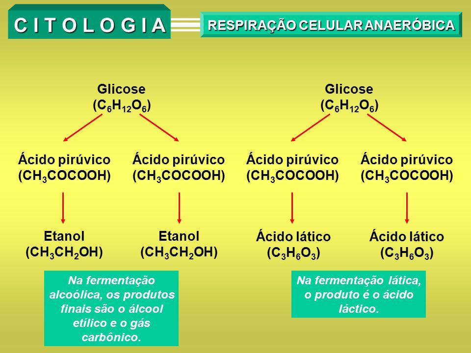C I T O L O G I A RESPIRAÇÃO CELULAR ANAERÓBICA Glicose (C 6 H 12 O 6 ) Glicose (C 6 H 12 O 6 ) Ácido pirúvico (CH 3 COCOOH) Ácido pirúvico (CH 3 COCO