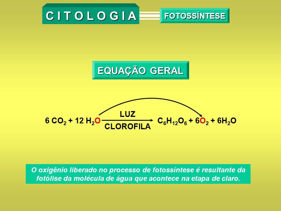 C I T O L O G I A FOTOSSÍNTESE EQUAÇÃO GERAL 6 CO 2 + 12 H 2 O LUZ CLOROFILA C 6 H 12 O 6 + 6O 2 + 6H 2 O O oxigênio liberado no processo de fotossínt