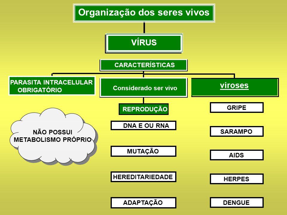 COMPOSIÇÃO QUÍMICA VÍRUS Organização dos seres vivos