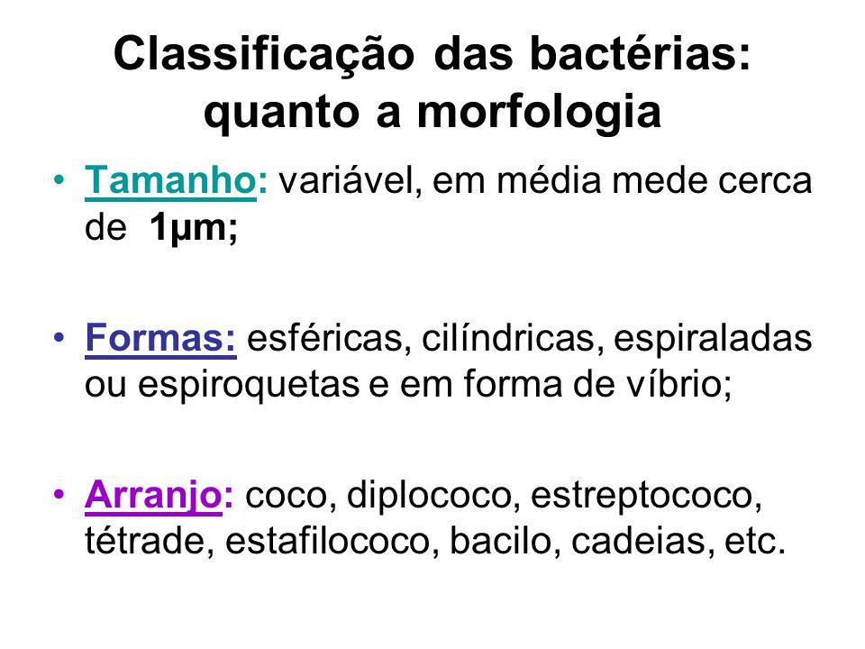 Classificação das bactérias: quanto a morfologia Tamanho: variável, em média mede cerca de 1µm; Formas: esféricas, cilíndricas, espiraladas ou espiroq