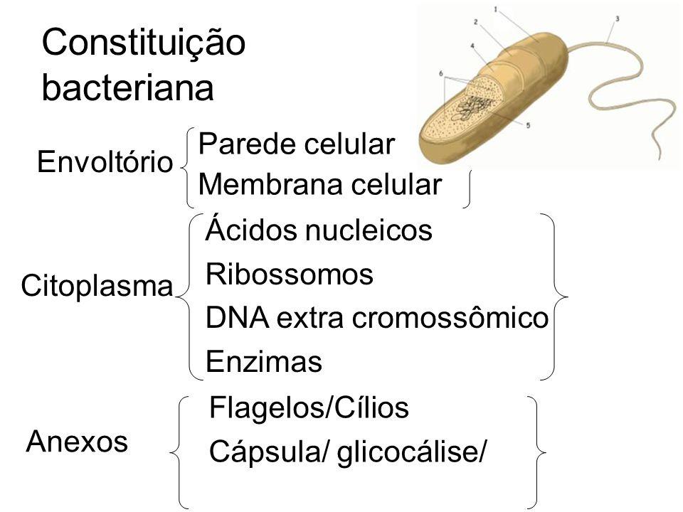 Constituição bacteriana Parede celular Membrana celular Flagelos/Cílios Cápsula/ glicocálise/ Ácidos nucleicos Ribossomos DNA extra cromossômico Enzim