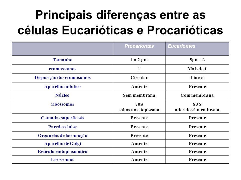 Principais diferenças entre as células Eucarióticas e Procarióticas ProcariontesEucariontes Tamanho1 a 2 µm5µm +/- cromossomos1Mais de 1 Disposição do
