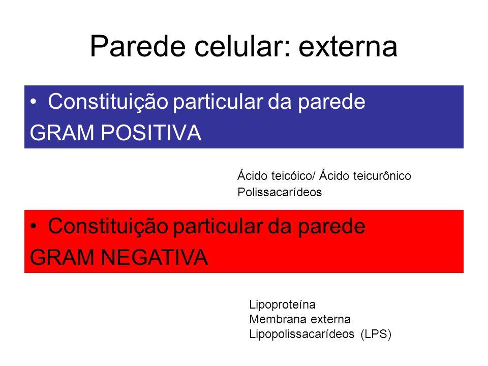 Parede celular: externa Constituição particular da parede GRAM POSITIVA Ácido teicóico/ Ácido teicurônico Polissacarídeos Constituição particular da p