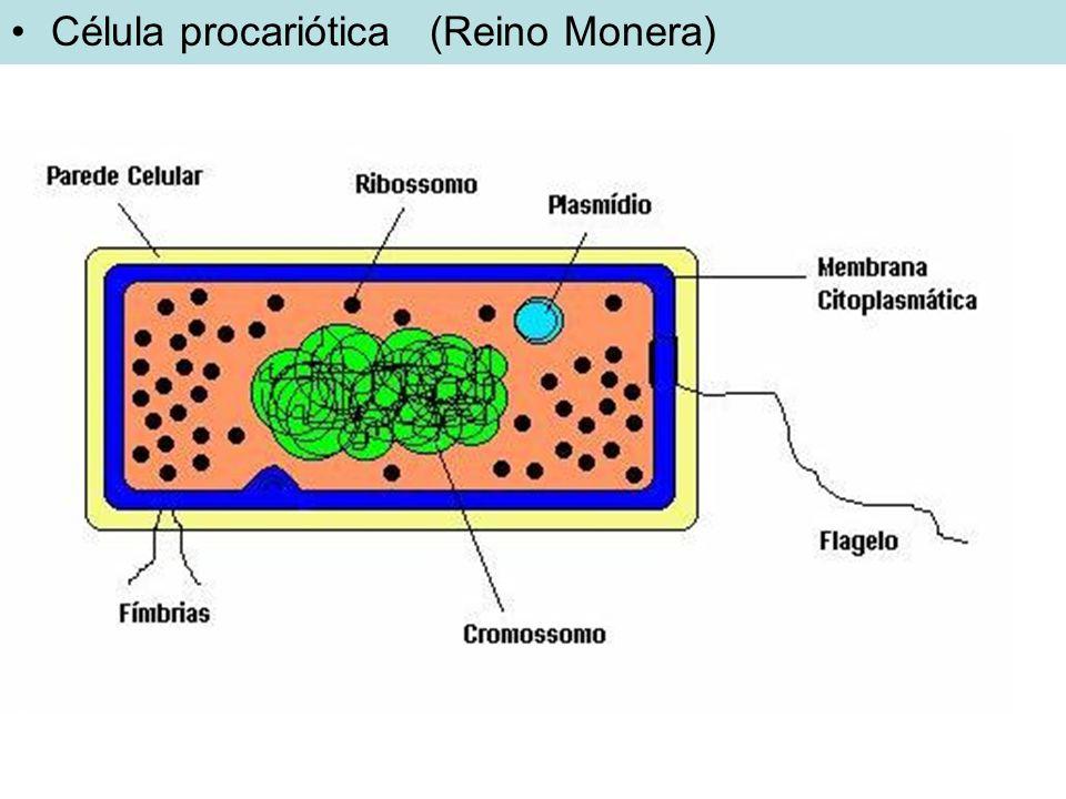 Célula procariótica (Reino Monera)
