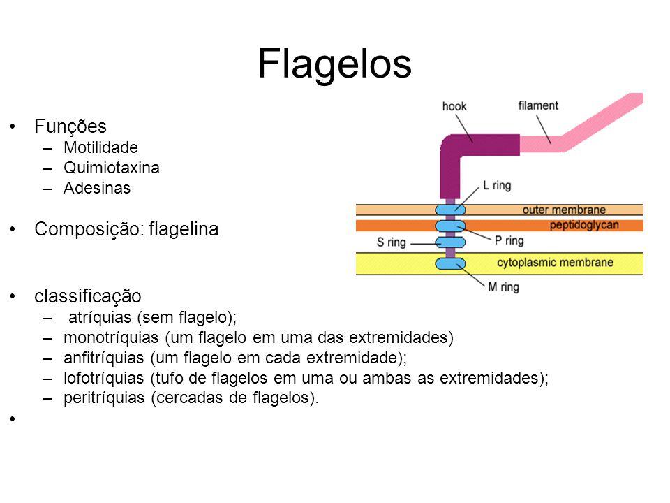 Flagelos Funções –Motilidade –Quimiotaxina –Adesinas Composição: flagelina classificação – atríquias (sem flagelo); –monotríquias (um flagelo em uma d