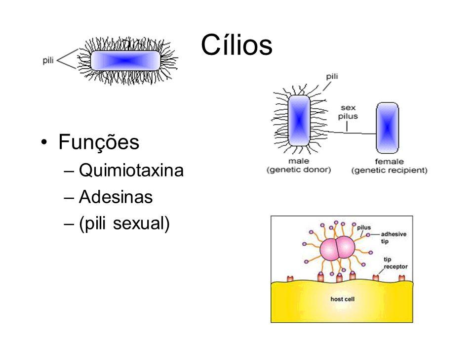 Cílios Funções –Quimiotaxina –Adesinas –(pili sexual)