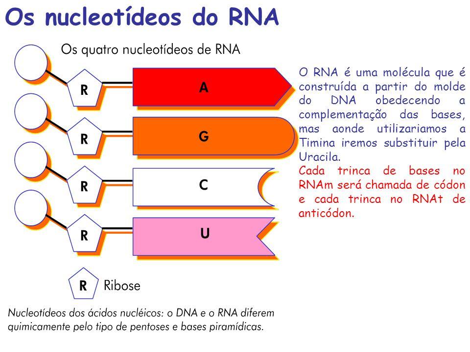 O RNA é uma molécula que é construída a partir do molde do DNA obedecendo a complementação das bases, mas aonde utilizariamos a Timina iremos substitu