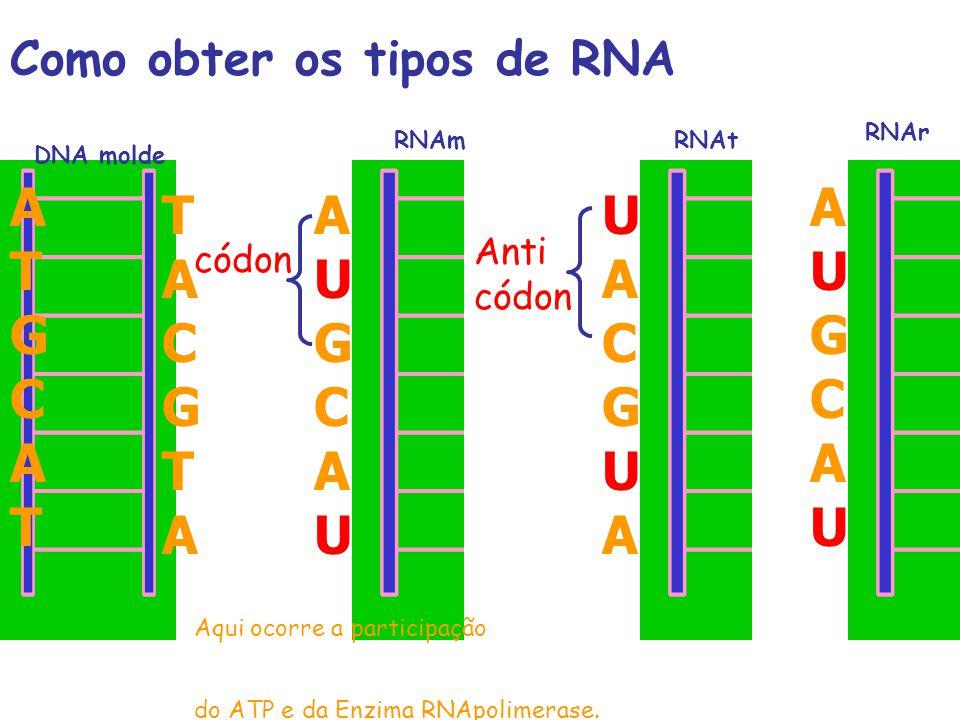 Como obter os tipos de RNA DNA molde RNAmRNAt RNAr T A C G T A A U G C A U U A C G U A A U G C A U A T G C A T Anti códon Aqui ocorre a participação d