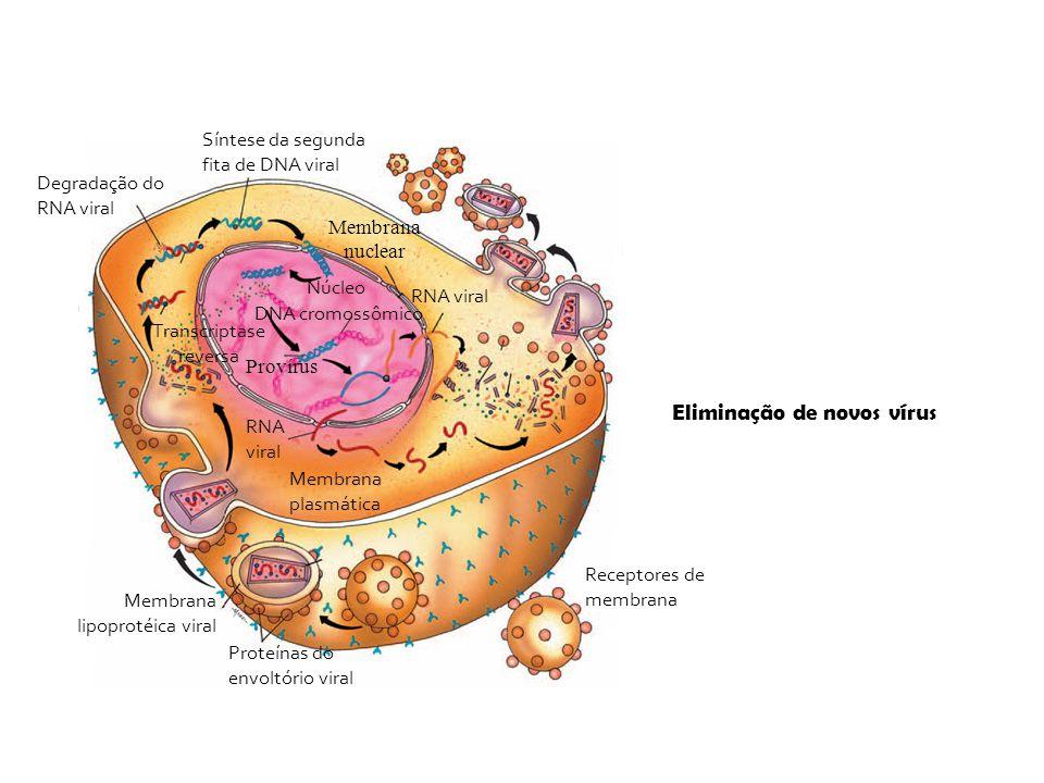 Eliminação de novos vírus Síntese da segunda fita de DNA viral Receptores de membrana Proteínas do envoltório viral Membrana lipoprotéica viral Degrad