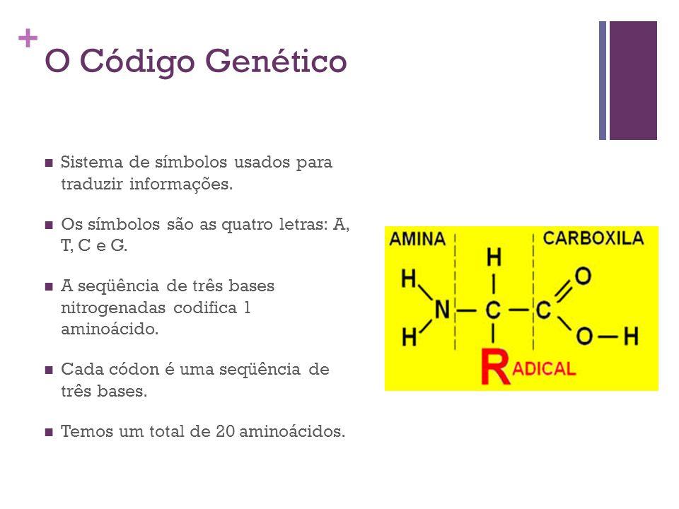 + O Código Genético Sistema de símbolos usados para traduzir informações. Os símbolos são as quatro letras: A, T, C e G. A seqüência de três bases nit