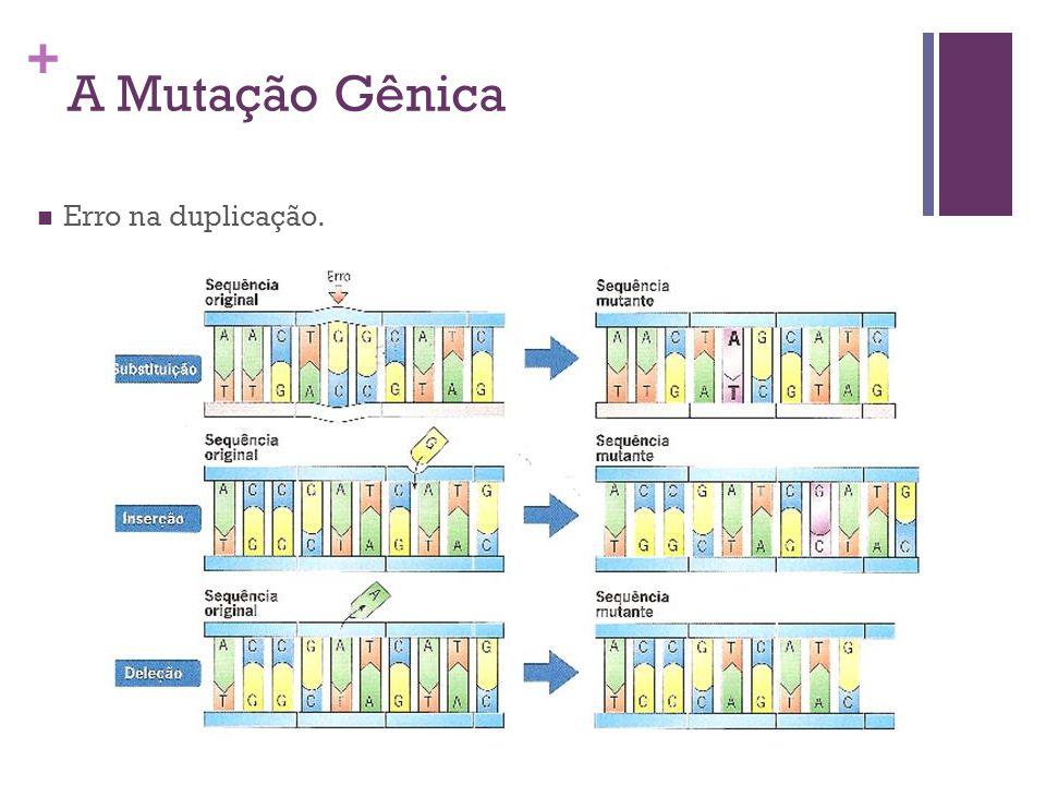 + A Mutação Gênica Erro na duplicação.