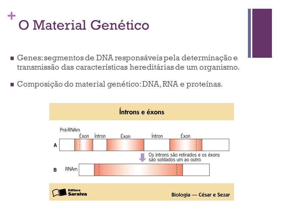 + O Material Genético Genes: segmentos de DNA responsáveis pela determinação e transmissão das características hereditárias de um organismo. Composiçã